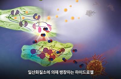 화학 김원종 교수 연구팀, 부작용 없는 류마티스 관절염 치료제 개발 가능성 제시