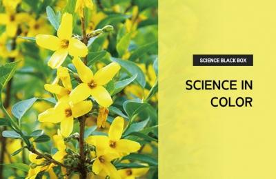 2019 봄호 /Science black box /Science in Color
