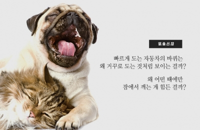 2019 겨울호 / 알.쓸.신.잡